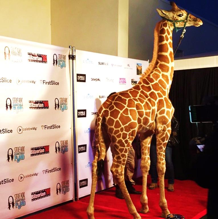 Dan Bilzerian, giraffe LA